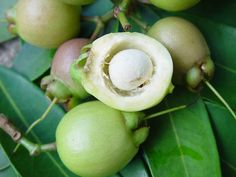 Rose apple fruits-Caribfruits - Pomme rose / Fruits des Antilles