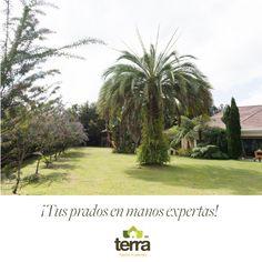 encargamos del mantenimiento de tu jardín. #TerraPradosyJardines #Landscaping #MantenimientodeJardines #Paisajismo #CortedeCésped #Cercovivo Prado, Landscaping
