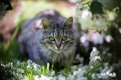 http://www.dyxum.com/dforum/cats-11_topic106246_page2.html
