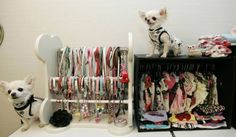 Clothes, clothes and more Chihuahua clothes! It's all happening at The Famous Chihuahua Store! Loads of #Chihuahua clothes and accessories! http://store.famouschihuahua.com