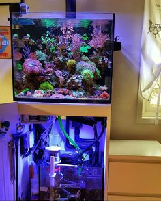 Now this is a cool setup! How do you like this Red Sea Reefer from Effective Pictures We Offer You About fly Fishes A quality picture can tell you many things. Aquarium Sump, Sea Aquarium, Saltwater Aquarium Fish, Nano Aquarium, Aquarium Design, Saltwater Tank, Freshwater Aquarium, Aquarium Ideas, Marine Aquarium Fish