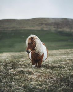 """11.3k Likes, 299 Comments - Alex Mazurov (@alex.mazurov) on Instagram: """"While traveling with @promoteshetland I may have already seen hundreds of Shetland ponies but this…"""""""