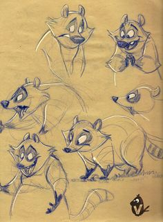 Raccoon studies