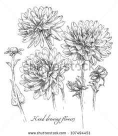 stock vector : Hand drawing flower