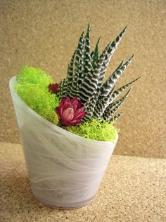 succulent gardens and terrariums from wendiland
