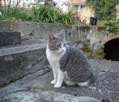 blog di Sara: la dieta della gatta renziana e la fiera delle noc...