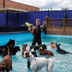 Awesome wAter dog park