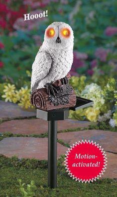 Solar Powered Hooting White Owl Motion Activated Lights Up Garden Stake Decor #HootingWhiteOwl #SolarPowered #Hooting #MotionActivated #LightsUp #Owl #White #GardenStake #LawnOrnaments #GardenDecor #YardDecor #Home #HomeDecor