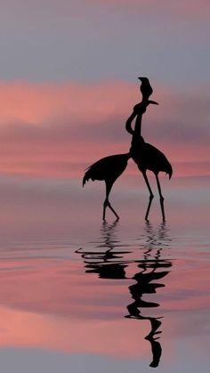 Phone Wallpaper Images, Cute Wallpaper Backgrounds, Animal Wallpaper, Pretty Wallpapers, Flamingo Wallpaper, Flamingo Art, Summer Wallpaper, Beautiful Nature Wallpaper, Beautiful Birds