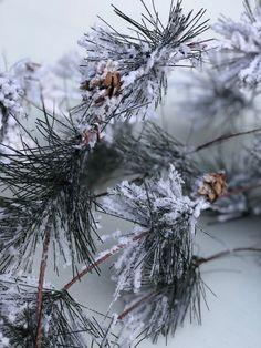 Smokey Pine snow Flocked 30 foot Christmas garland - available on Amazon