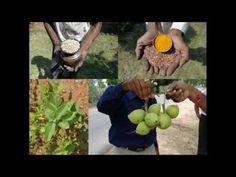 Medicinal Rice P5L Formulations for Tarenna Excess: Pankaj Oudhia's Medi...