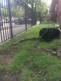 Fall. Stick. Dog. Happiness.