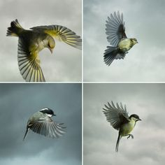 In Flight: Dramatic Photographs by Mark Harvey Capture Acrobatic Birds Mid-Air | Colossal Coal Tit, Really Cool Photos, Common Birds, Great Tit, Colossal Art, Stunning Photography, Inspiring Photography, Bird Pictures, Science And Nature