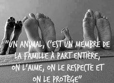 Un animal c'est un membre de la famille à part entière : on l'aime, on le respecte et on le protège ❤