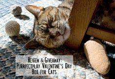 Review & Giveaway: Purrfectplay Valentine's Day Box for Cats #sponsored