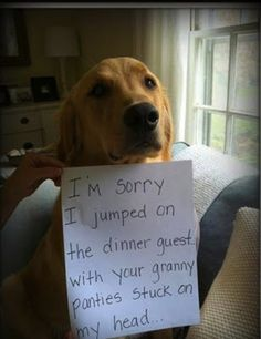 funny dog shame granny panties picture