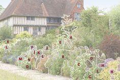 A) Peucedanum verticillare (giant hog fennel or milk parsley) B) Geranium pratense (meadow cranesbill) C) Geranium pratense subsp. alba (white-flowered meadow cranesbill) D) Aquilegia vulgaris 'Alba' (white columbine) E) Pastinaca sativa (parsnip) F) Hesperis matronalis (dame's violet) G) Verbascum 'Christo's Yellow Lightning'(verbascum) H) Allium christophii (star of Persia) J) Allium afl atunense (ornamental onion) K) Gladiolus communis subsp. byzantinus (Byzantine gladiolus or Jacob's lad