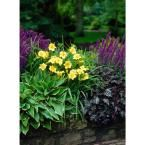 Perennial Collection Roots (4-Pack)