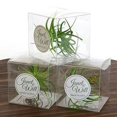 Wedding favor ideas + inspiration to help you ditch the favors guests will toss and give them something unique that they'll want to keep! Cute favor ideas, sustainable wedding favors, food favors, DIY wedding favors and other favors that guests will love! Wedding Favours Uk, Plant Wedding Favors, Wedding Plants, Unique Wedding Favors, Wedding Gifts, Diy Wedding, Wedding Flowers, Clear Gift Boxes, Succulent Favors