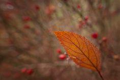 Kathleen Clemons Photography: Lensbaby Macro Converters  @Lensbaby