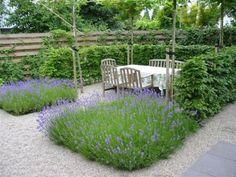 Lavendel en de beukenhaag een mooi combinatie samen met het grint