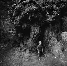 Arthur Tress, Boy Under Redwoods, Santa Cruz, California, 1971 Modern Photography, Black And White Photography, Street Photography, Creepy Photos, Cool Photos, Arthur Tress, Henri Cartier Bresson, Spooky Places, Creepy Horror