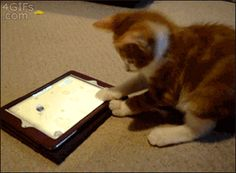 Kitty gets mind blown playing with the iPad…Click for the gif! So funny! haha