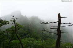 Scenery  of the Heullim-Gol in  Seolak-San Mountain by Bang, Chulrin /Architect Group CAAN