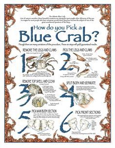 How to Pick a Blue Crab. Everyone in Maryland swears by their method of picking their steamed blue crabs.  After all, we learned how from our parents and family.  Some folks have even learned from the professional crab pickers using a tradition of years past.  Using this guide, you'll soon be picking, eating, drinking and chatting all at the same time, too! Click here to buy a print of this image:  http://www.jwbartunlimited.com/products/how-to-pick-a-blue-crab   $25
