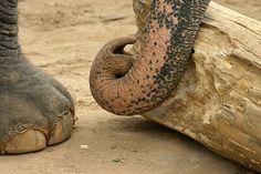 Tierische Gesetze Folge 58 | Kuriose Tierwelt