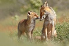 18 Adorable Photos of Animals Caught in a Warm Embrace - My Modern Met
