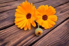 4 Calendula Uses for Your Health - Natural Health - MOTHER EARTH NEWS
