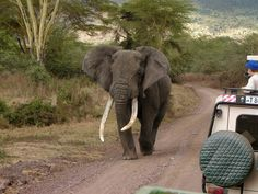 Elephant in Queen Elizabeth national park, Uganda.