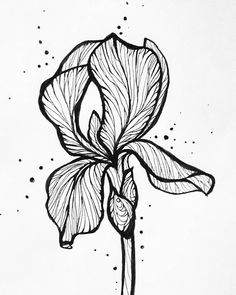 Дачные зарисовки остались на даче бабушке на память теперь занимают почетное место среди портретов)) бабушки такие бабушки#рисунок #ирис #цветы #графика #рисунок #эскиз #drawing #graphic #paint #flowers #illustrator #iris #tattoodesign #tattoos #artweinspire #topcreator by shmolka