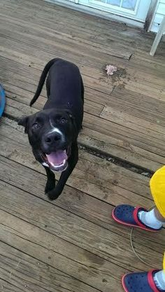 Roman up for adoption in Conover NC. Looking for his own family!!