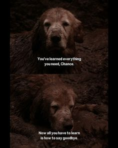 Homeward Bound | 18 Movies From Your Childhood That Are Way Darker Than They Seem