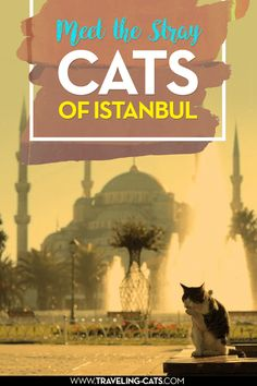 One of the many stray cats of Istanbul, Turkey