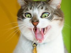 cat funny | Funny Cat Wallpapers For Desktop 2012 | Funny World