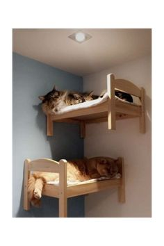 Animal Room, Animal House, Ikea Doll Bed, Doll Beds, Ikea Cat Bed, Cat Bunk Beds, Pet Beds, Beds For Cats, Cool Cat Beds