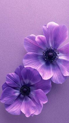 Iphone Wallpaper Violet, S5 Wallpaper, Purple Flowers Wallpaper, Dark Purple Flowers, Beautiful Flowers Wallpapers, Nature Wallpaper, Wallpaper Backgrounds, Wallpaper Ideas, Trendy Wallpaper