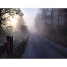 Finns det någon form av reflex att använda i dimma? Eller har Tynningöbussen radar?  #Padgram