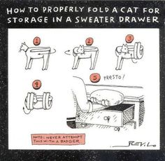 How to properly fold a cat for storage in a sweater drawer