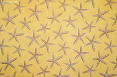 New Fabric!!! The Starfish Upholstery Fabric that we have had in Light Blue, Red and Dark Blue is now in stock in a smooth wash of muted golden yellow!