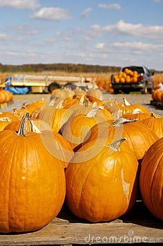 Pumpkin Patch in Northern Virginia