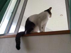 窓辺のネコ