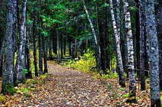 North Country Trail in Minnesota  #MSPgetawaypinfest