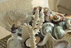 """TIP Think in Themes Giannetti suggests grouping your beachy items for added impact. """"Displaying objects by theme is a fun way to create a larger, very expressive moment. Soon you'll be dreaming of the beach in your own coastal-inspired home. Shell Display, Shell Collection, I Love The Beach, Shell Art, Love Home, Inspired Homes, Coastal Decor, Sea Shells, Gifts"""