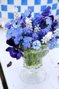 grape hyacinths, forget me nots