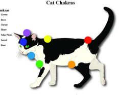 DIGITAL Cat 7 Chakras Educational Charts Animals Reiki Hand Positions Energy Healing Vortexes Therapy Energy System Pendulum