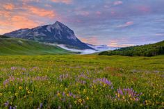 Dallas Morning News - wildflowers in Crested Butte, CO